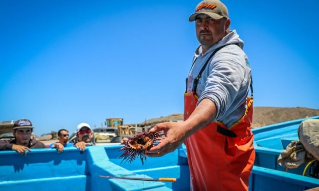 Consolidará Gobierno del Estado estrategia pesquera y acuícola en 2019