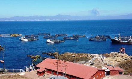 Destinarán Estado y Federación 10 mdp para pesca y acuacultura
