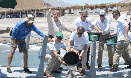 UABC libera alevines de totoaba en San Felipe