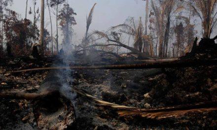 Países ricos donarán 20 mdd para la Amazonia
