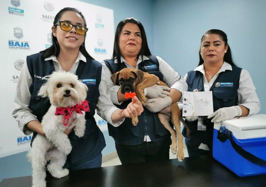 Instalarán 150 puestos de vacunación antirrábica en Baja California