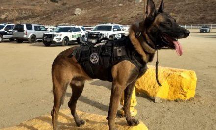 Cuenta Guardia Estatal de Seguridad con el mejor agente canino a nivel internacional