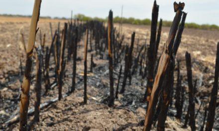 Diseña Secretaría del Campo programa para erradicar las quemas agrícolas