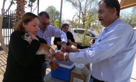 Prepara Secretaría de Salud jornada de vacunación antirrábica en Mexicali
